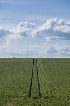 Field + clouds 01
