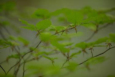 Leaves Hallerbos 010 by ISOStock