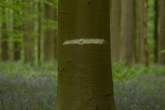 Blue Forest Hallerbos 005