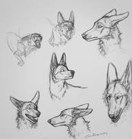 Assorted R1 sketches by Canis-ferox