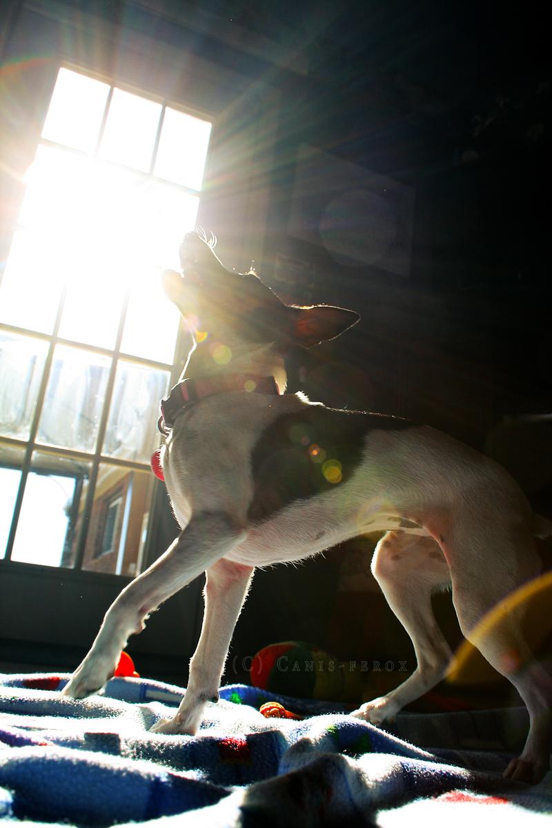 Sunburst Catcher by Canis-ferox