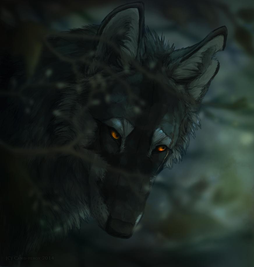 Ember Eyes by Canis-ferox