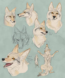pale coyote ROUGH concept