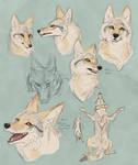 pale coyote ROUGH concept