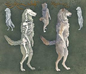 Sylkarian Wolf Anatomy