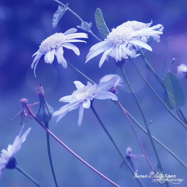 .:White as Snow:. by Manon-Blutsanguen