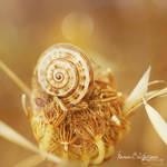 .:Flower's Little Snail:. by manon-lightcrafts