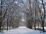 Allee de l'hiver