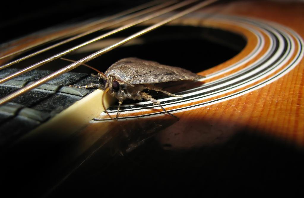 My Little Musical Friend