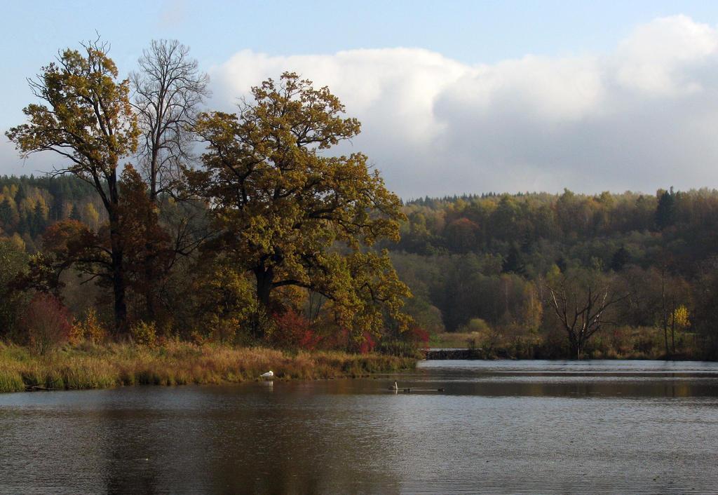 Autumnal Ponds