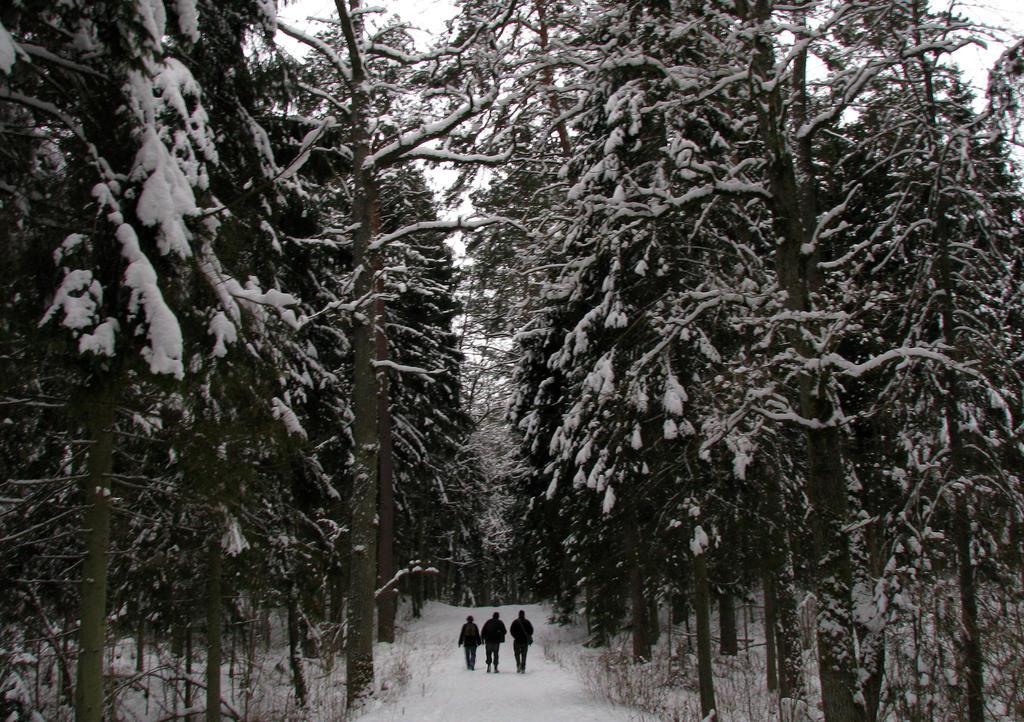 Three : Tiny in the Woods
