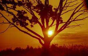 Redscale Haze: Fake Africa by Helkathon