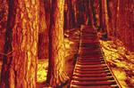 Redscale Haze: Stairway to...