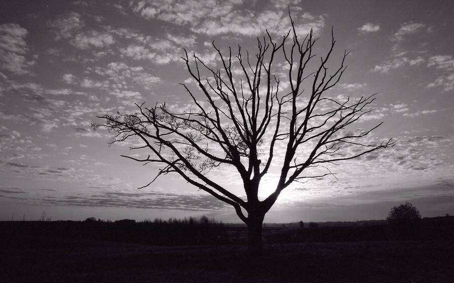 The Old Loner II by Helkathon