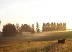 Morning Moo by Helkathon
