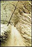Winterpath III by Helkathon