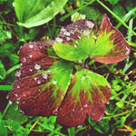 InstaG: After the Rain