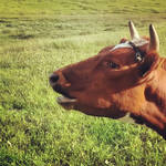 InstaG: Moo, Shook Me All Night Long