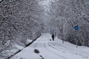 Winterwalking the Dog by Helkathon