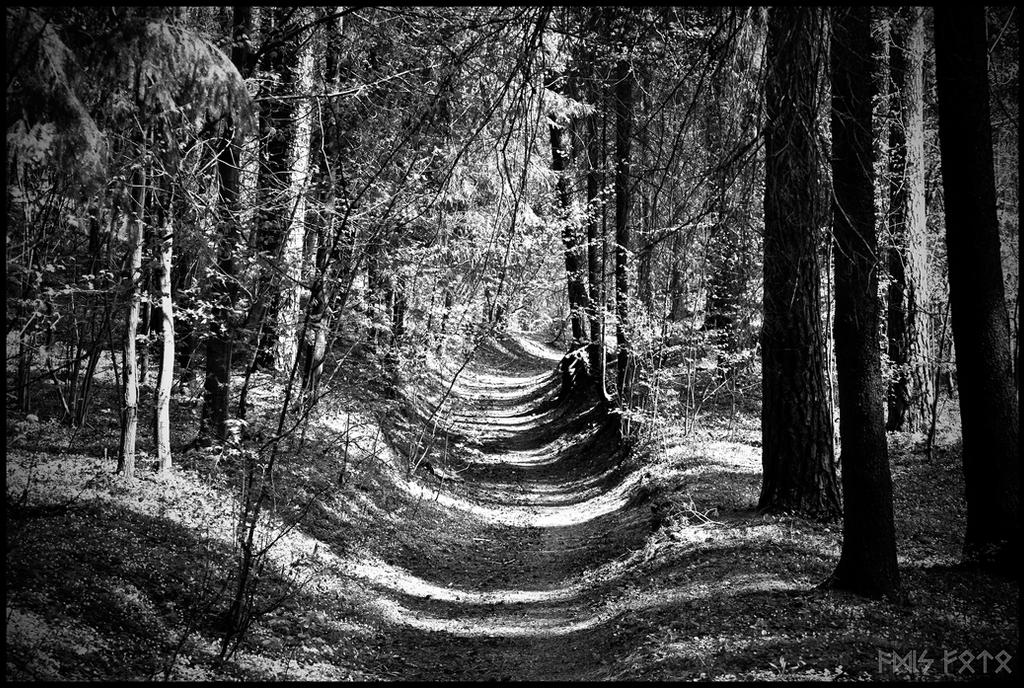 The Blackwalk