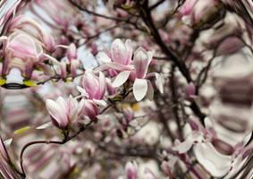 Viennese Spring