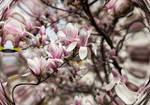 Viennese Spring by Helkathon