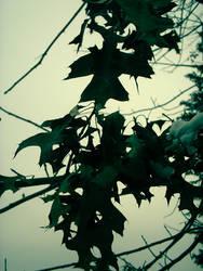 Leaf Me Alone by renobemit36