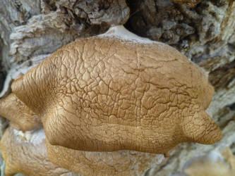 Organic Wrinkled Texture
