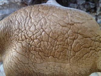 Organic Wrinkled Texture 2 by MagikFeller
