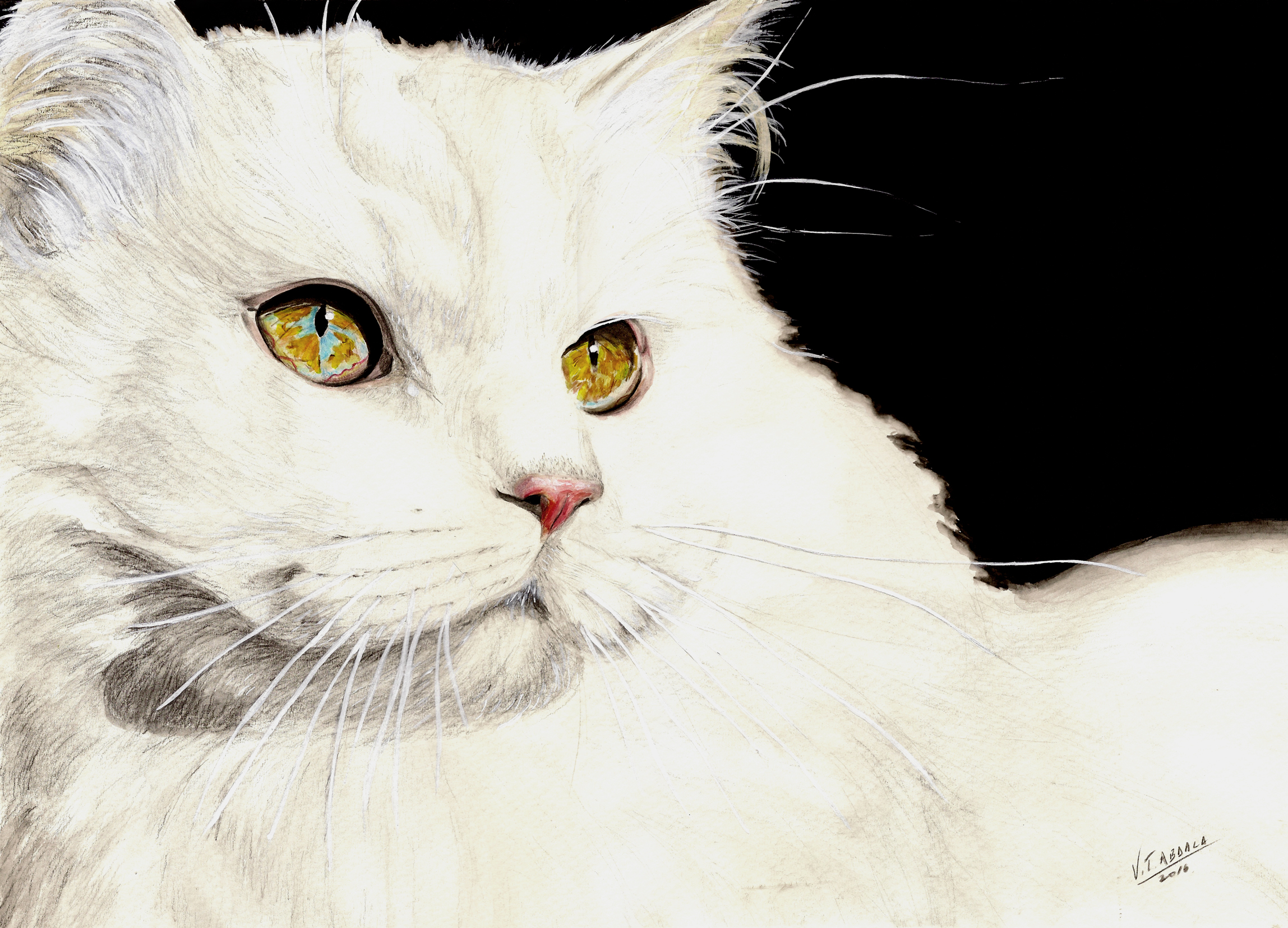 Cat - Gato by VTAbdala