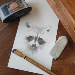 drawing for my Raccoon lightbox
