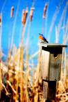 Blue Bird by xsound-trackx