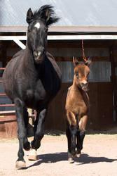 Horse and Mule by acojon