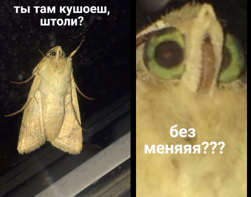 moth_by_alexiuss-dbpdgri.jpg