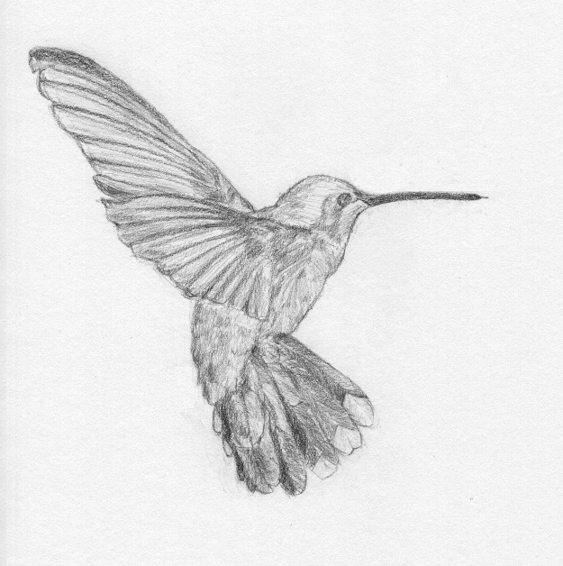 how to draw a realistic hummingbird step by step