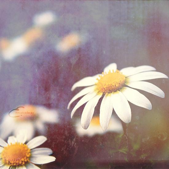 Il Sole Dentro Di Me by romancedecay