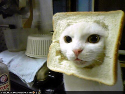 FUNNY BREAD CAT BRO by bigpeteypoo