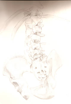 Lumbar and Sacral spine study