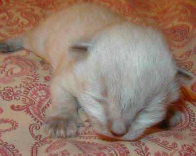 Baby Kitty by piccolonamek