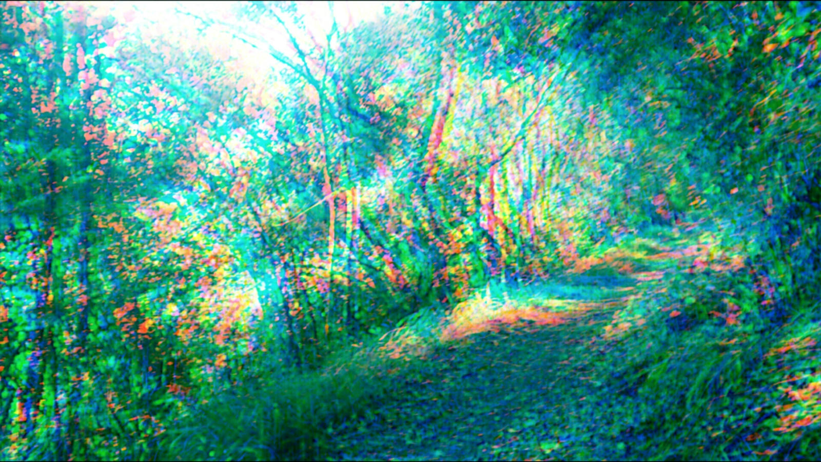 trippy forest 3 by aniabuckle on deviantart