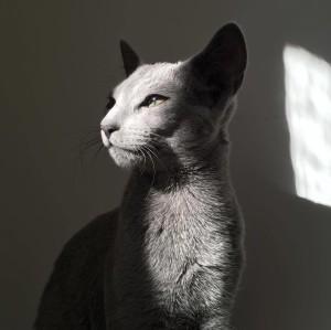 silvernark's Profile Picture