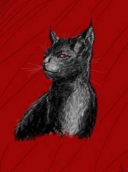 Cat by silvernark