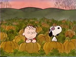 Linus and Snoopy in the pumpkin patch