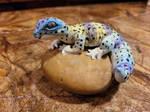 Handmade leopard gecko polymer sculpture