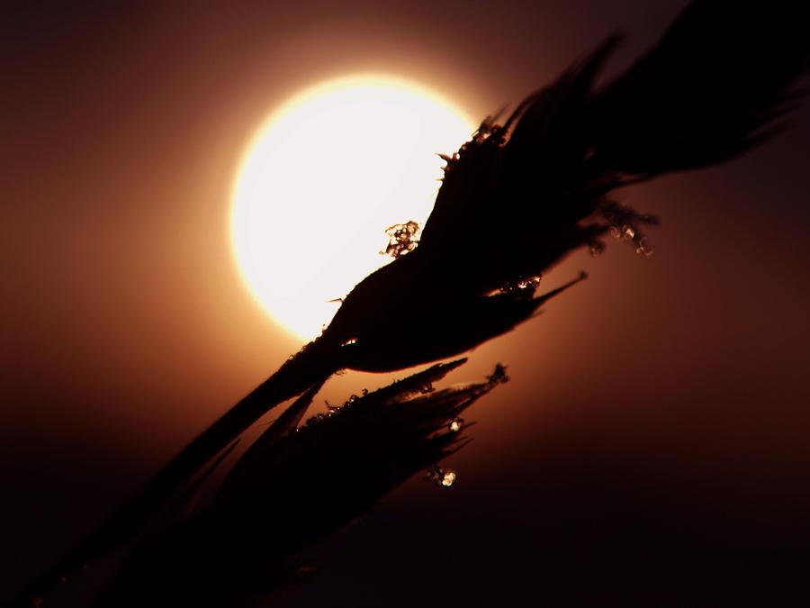 Winter's sun by GertuSaariste