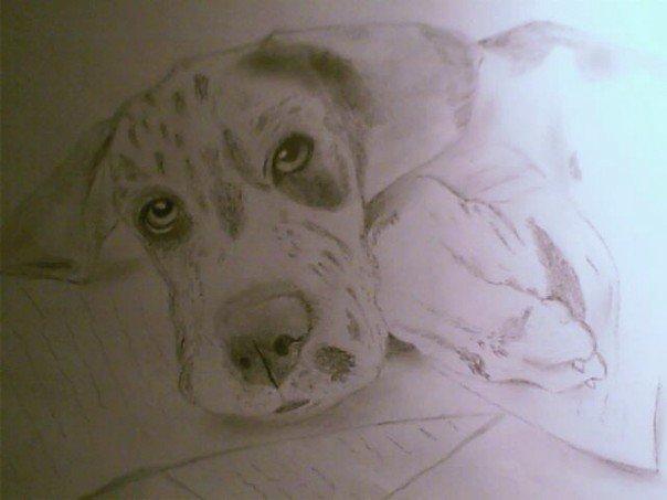 Dog_Portrait by warpdesign