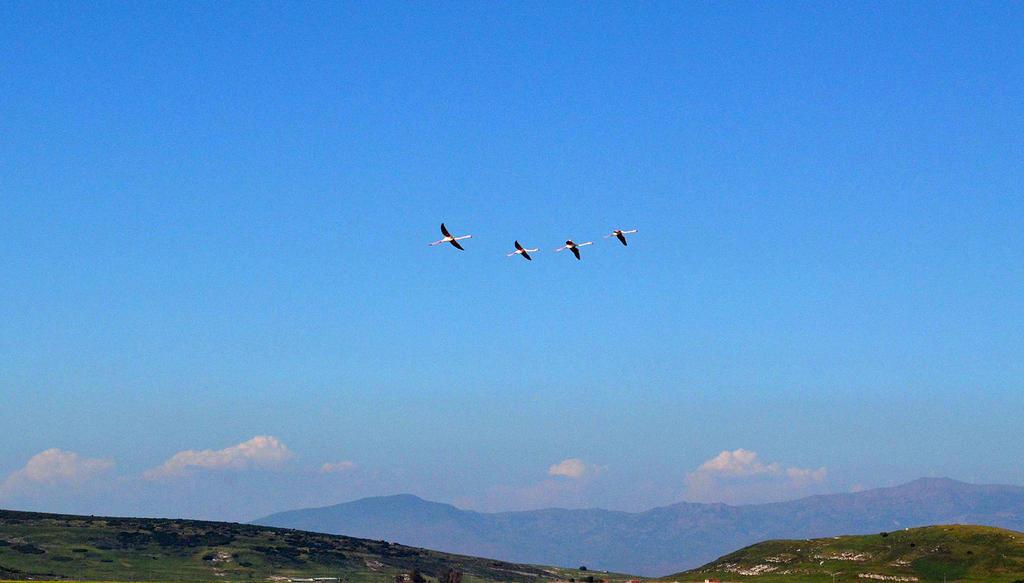 Flamingos 3 by eongun
