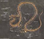Asian Lung Skeleton Anatomy