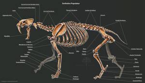 Smilodon Populator Skeleton Study by TheDragonofDoom
