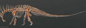 Amargasaurus Skeletal Study (No Labels)
